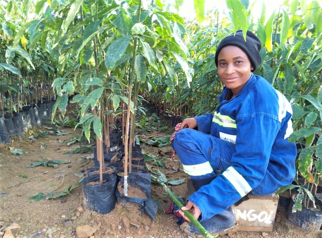 Nurturing the young rubber plants in Cameroon